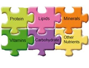 basic of nutrition